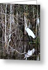 Great White Egret Greeting Card