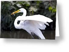 Great White Egret Eating Fish 1 Greeting Card