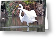 Great White Egret Fishing 1 Greeting Card