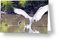 Great White Egret Fishing Sequence 2 Greeting Card