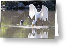 Great White Egret Fishing Sequence 4 Greeting Card