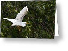 Great White Egret Flying 1 Greeting Card