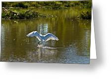 Great White Egret In Sunlight Greeting Card
