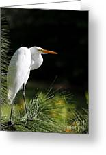 Great White Egret In The Tree Greeting Card