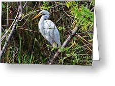 Great White Egret In The Wild Greeting Card
