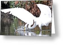 Great White Egret Splash 1 Greeting Card