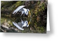 Great White Heron Fishing Greeting Card