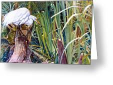 Great White Heron Sanctuary Greeting Card