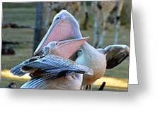 Great White Pelicans Greeting Card