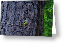 Greater Crested Flycatcher Greeting Card