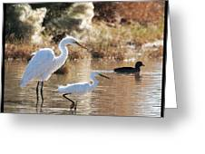 Greater Egret Lesser Egret And Coot Greeting Card