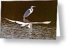 Greater Egrets Meeting Up Greeting Card