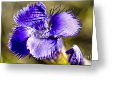 Greater Fringed Gentian Greeting Card