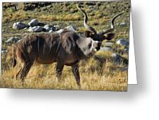Greater Kudu Grazing Greeting Card