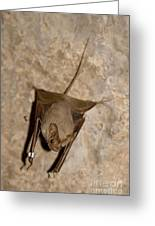 Greater Mouse-tailed Bat Rhinopoma Microphyllum Greeting Card