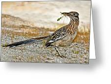 Greater Roadrunner With Nest Material Greeting Card