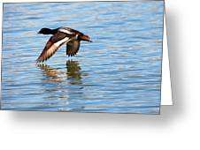 Greater Scaup In Flight Greeting Card
