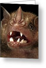 Greater Spear-nosed Bat Greeting Card