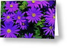 Grecian Wildflowers 2 Greeting Card