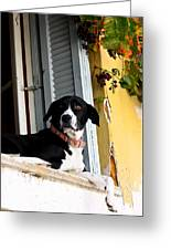 Greek Dog Greeting Card