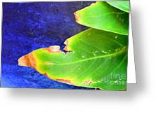 Green And Blue  Greeting Card by Bobby Mandal