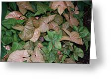 Green And Brown Leaves Greeting Card
