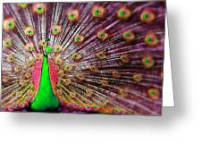 Green And Pink Peacock Greeting Card by Diana Shively