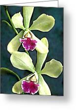 Green And Purple Cattleya Orchids Greeting Card