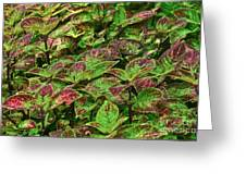 Green And Purple In Nature Greeting Card