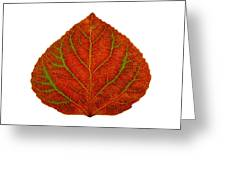 Green And Red Aspen Leaf 3 Greeting Card
