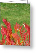 Green And Red Greeting Card