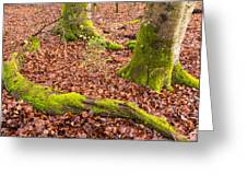 Green And Red Nature In The Forest Greeting Card