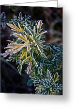 Green And Yellow Frost Greeting Card