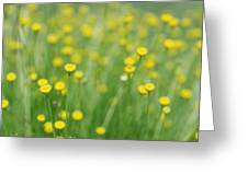 Green And Yellow Vintage Greeting Card