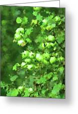 Green Apple On A Branch Greeting Card