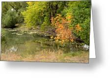 Green Ash In Autumn Foliage Greeting Card