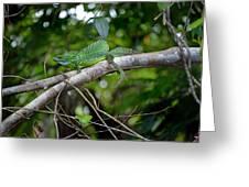 Green Basilisk Lizard Greeting Card