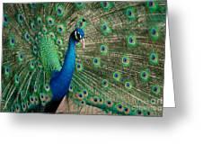 Green Beautiful Peacock Greeting Card