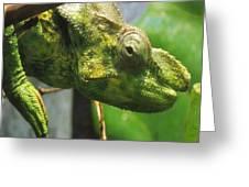 Green Beauty Greeting Card