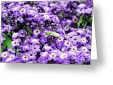 Green Bee Tiny Pollinator Greeting Card