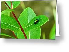 Green Beetle Foraging Greeting Card