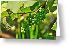 Green Berries Greeting Card by Kaye Menner