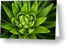 Green Buds Greeting Card
