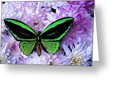 Green Butterfly And Mums Greeting Card