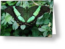 Green Butterfly Greeting Card