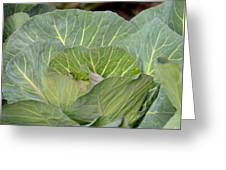 Green Cabbage Greeting Card