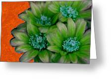 Green Cactus Flowers Greeting Card