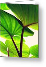 Green Canopy Pastel Greeting Card