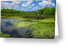 Green Cay Nature Preserve Beauty Greeting Card