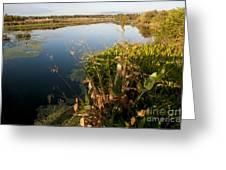 Green Cay Wetlands, Fl Greeting Card by Mark Newman